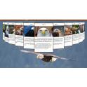 Webová šablona ve 3D - Orel